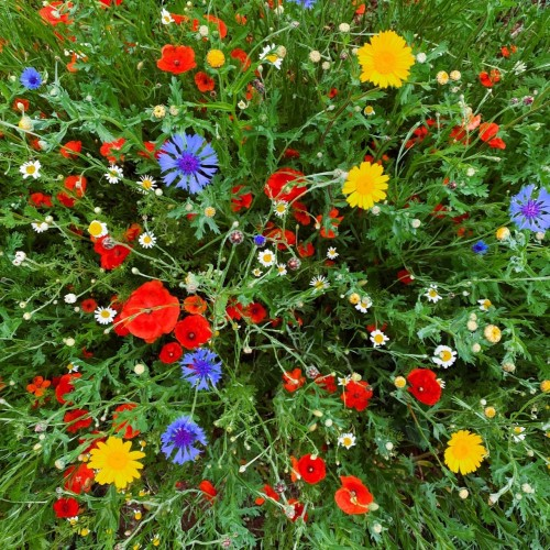 Wild Flowers Gardening Course
